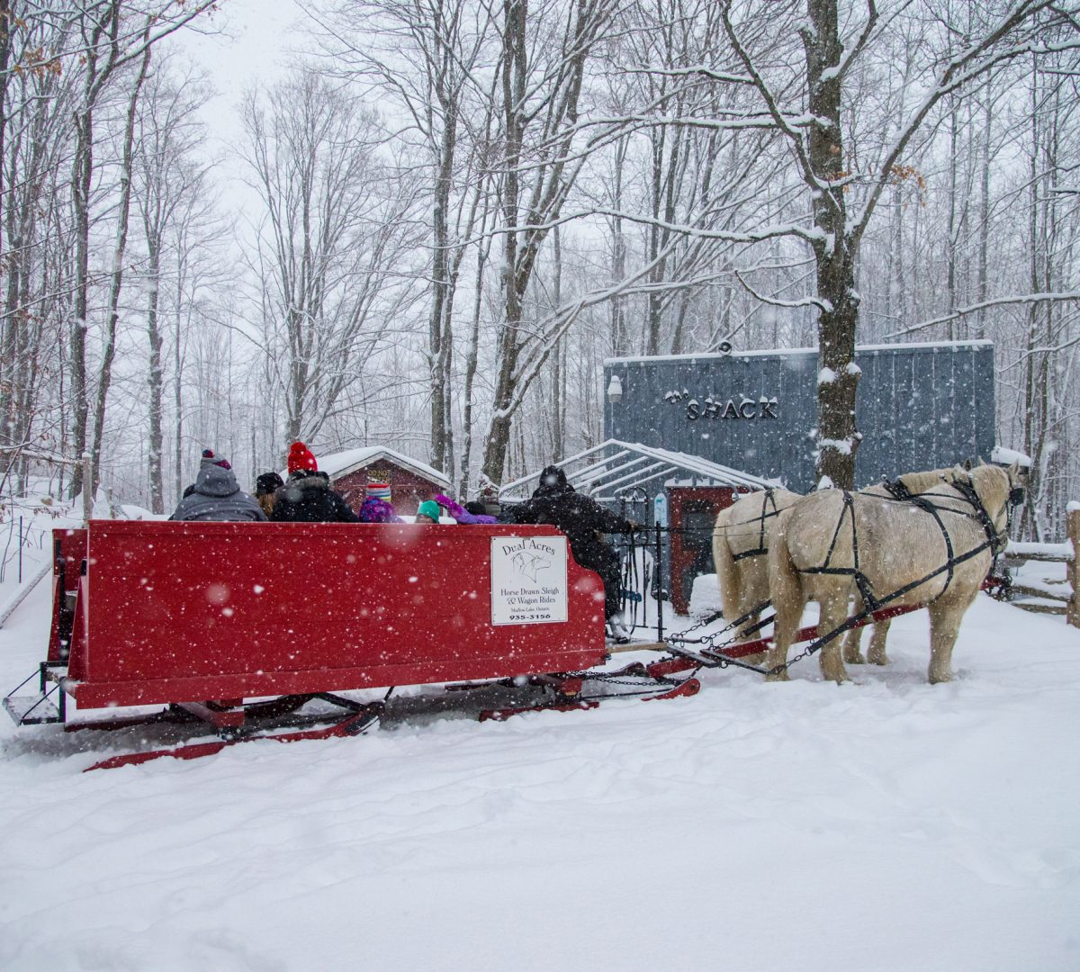 winter-sleigh-ride-1