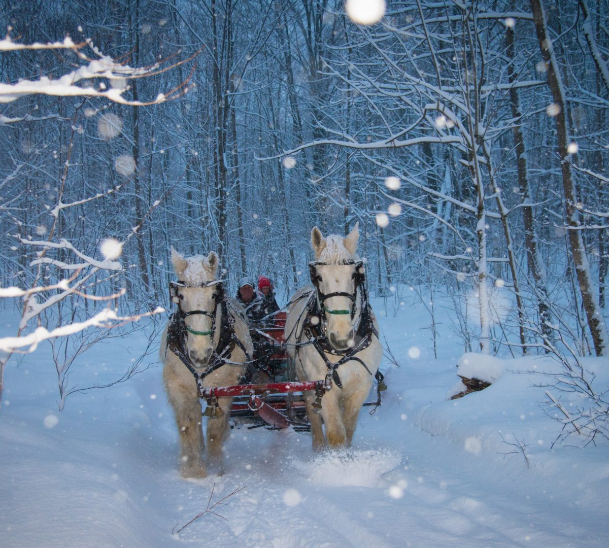 evening-sleigh-ride