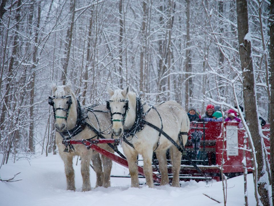 winter-sleigh-ride-3